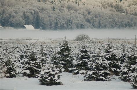 28 best snowshoe christmas tree farm 25 best ideas