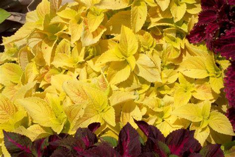 nick s greenleaf gardens more photos