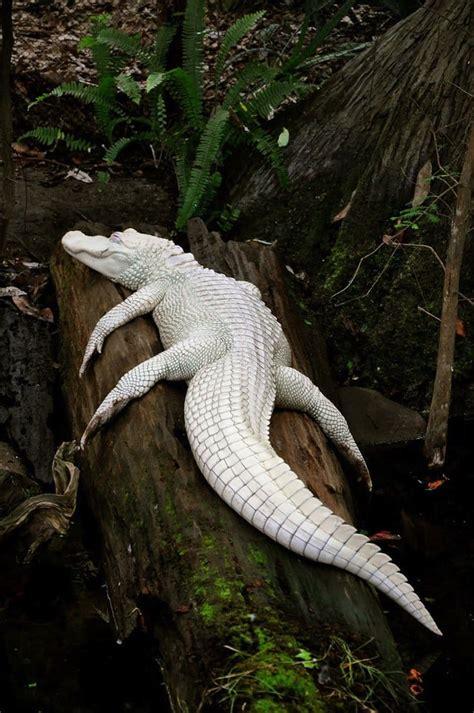 coolest  cutest  albino animals