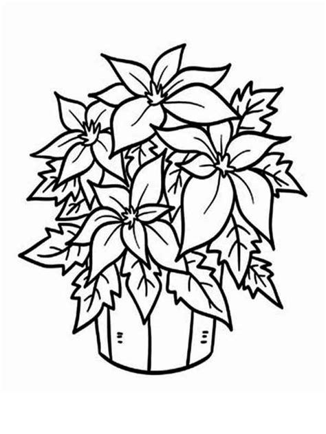 coloring page christmas flower holiday coloring pages cactus page flower 2289 2 cactus