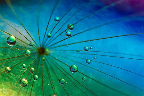 wallpaper rain drops macro hd photography
