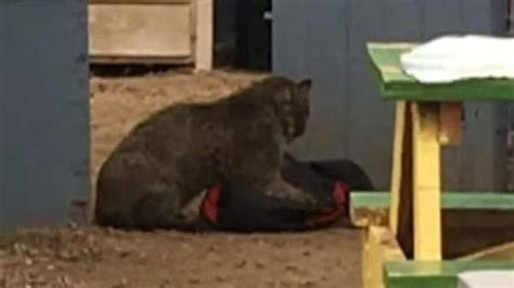 bobcat attacks dear dzhokhar tsarnaev rebekah gregory s response to boston marathon bombing