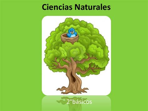 imagenes ciencas naturales ciencias naturales 2 176 b 225 sicos ppt video online descargar