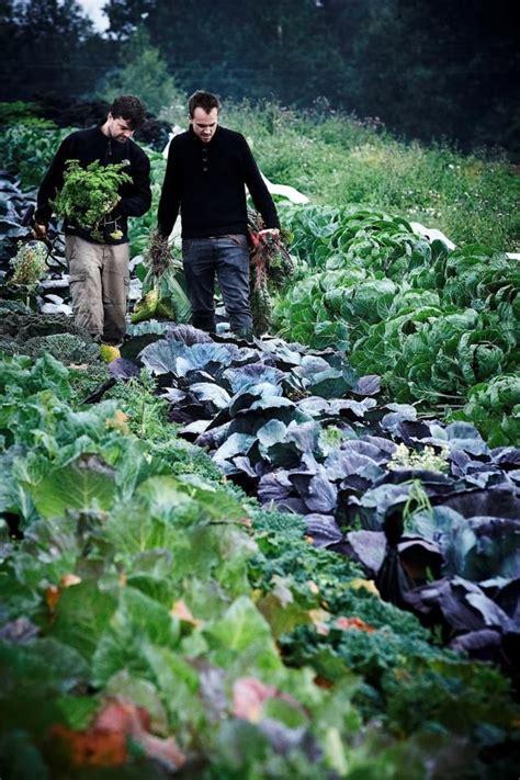 Chefs Of Restaurant Radio In Copenhagen Select The Day S Vegetable Garden Restaurant