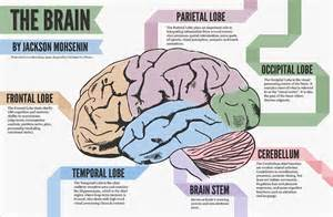 different parts of the brain and what they do what do