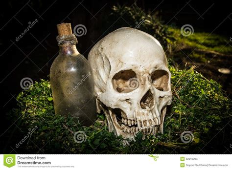 backyard skulls still life human skull in the garden stock photo image