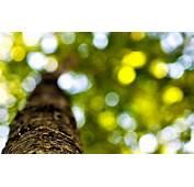 Tree Bark Close Up Wallpaper 49760 1920x1200 Px