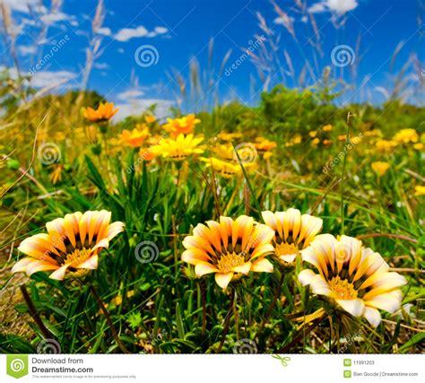 imagenes flores salvajes flores salvajes fotos de archivo imagen 11991203