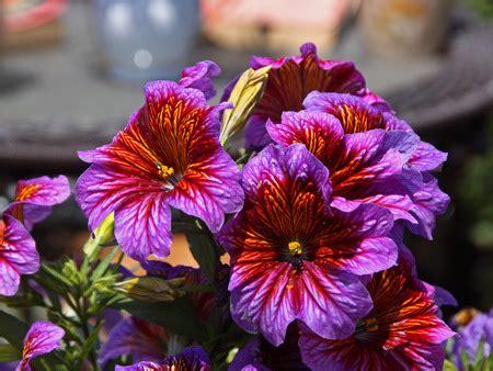 bright colored flowers bright colored flowers flowers nature background