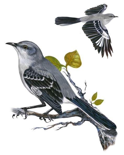 Northern Mockingbird Drawing northern mockingbird tattoos tennessee