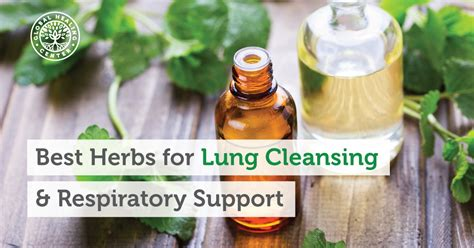 Lung Detox Herbs by The 9 Best Herbs For Lung Cleansing And Respiratory