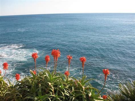 i fiori mare mare e fiori