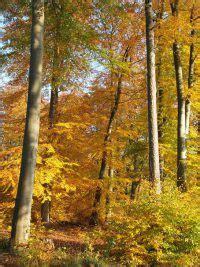 Herbst Garten Was Ist Zu Tun by Wohin Mit Dem Herbstlaub Der Garten Im Herbst Was Ist