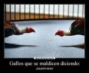 gallos con frases gallos que se maldicen diciendo desmotivaciones