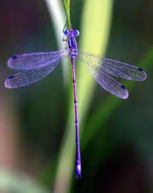 dragonfly the colors of nature