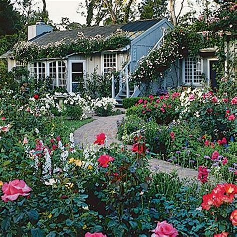 guide to cottage gardening gardens shrub roses and flower