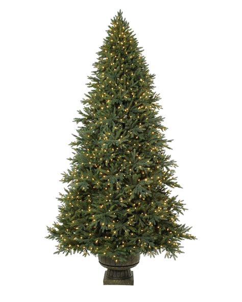 colorado mountain christmas tree potted colorado mountain spruce balsam hill