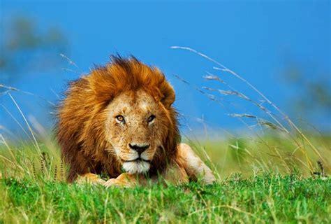 imagenes animales movimiento image gallery imagenes de animales bonitos