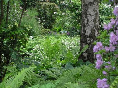 Garten Pflanzen Halbschatten by Pflanzen F 252 R Schatten Halbschatten Und Absonnige