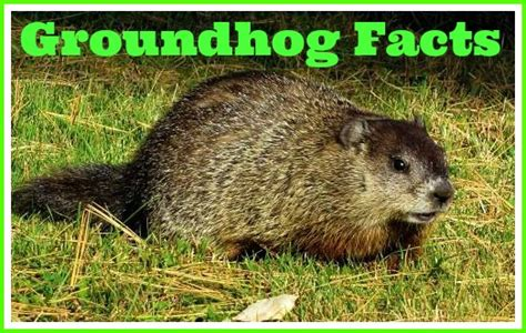 groundhog day quora groundhog day quora 28 images groundhog day quora 28