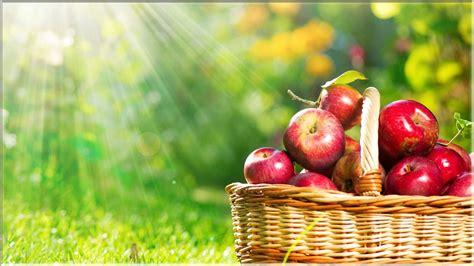 Keranjang Buah 15 wallpaper buah apel kualitas hd www buahaz