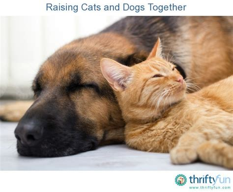 raising puppies the gallery for gt dogs and cats sleeping together