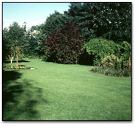 Ebay Kleinanzeigen Garten Und Pflanzen by Pflanzen Kleinanzeigen