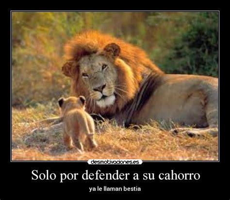imagenes leones para niños im 225 genes y carteles de leones pag 2 desmotivaciones