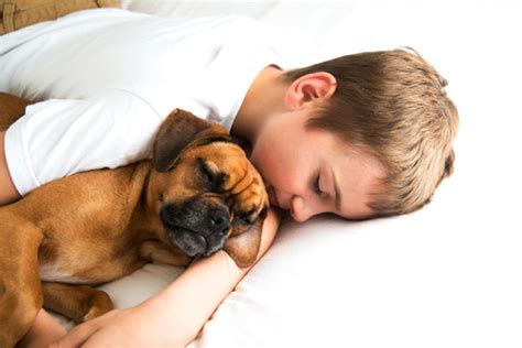 dogs cuddling the 10 breeds that enjoy cuddling the most iheartdogs