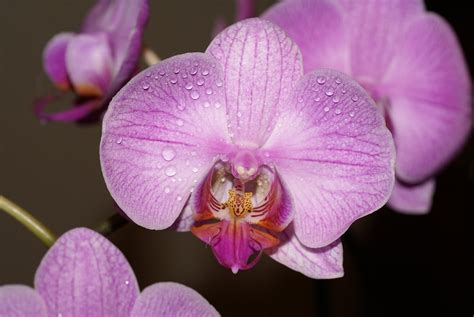 Orchid Facts | 15 amazing facts about orchids
