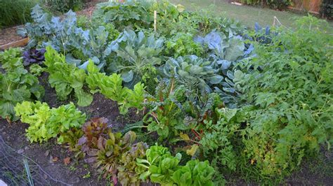 growing a fall vegetable garden in the big city
