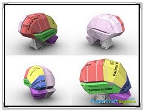 How To Make A Paper Brain - quot map of the brain quot papercraft papercraftsquare