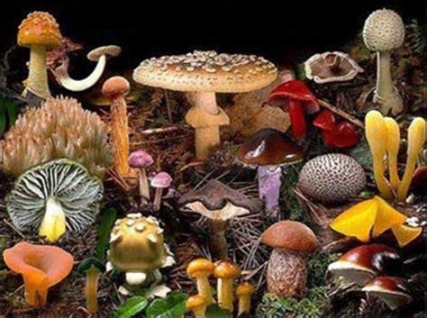 imagenes surrealistas definicion 191 qu 233 es micolog 237 a su definici 243 n concepto y significado