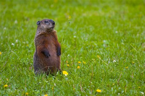 groundhog day world peace i groundhogs i