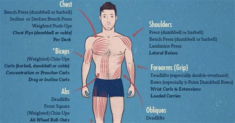 long     build muscle  infographic
