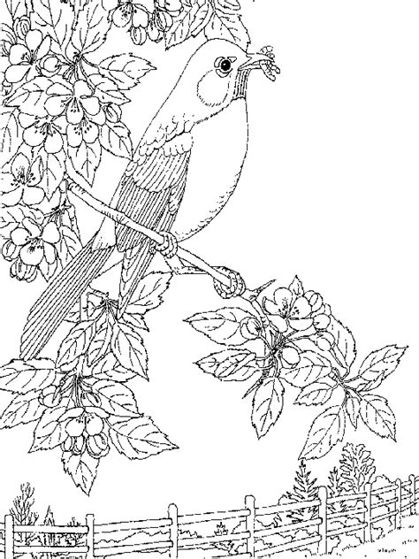 malakiah nightingale s creatures a colouring book by yhon dos santos creepy colouring books i like books nightingale coloring page animals town free