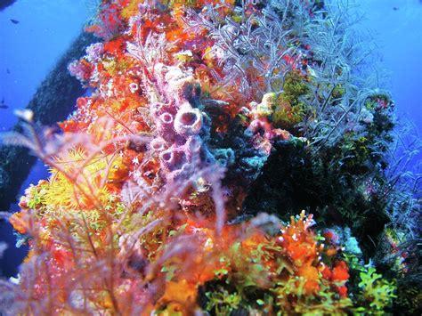 underwater christmas tree photograph underwater