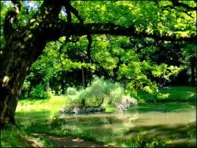 baum garten file tree in zugdidi botanical garden jpg
