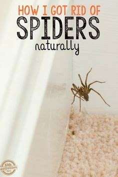 25 best ideas about spider repellant on