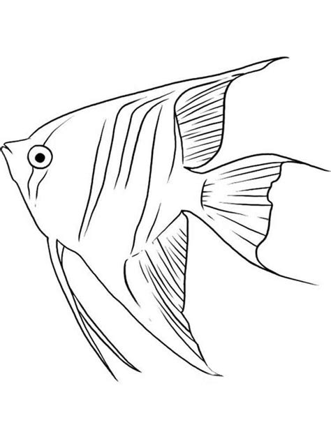 Rainbow Trout Coloring Page Pictures For Fish Pages