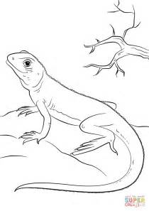 big lizard coloring page iguana free colouring pages