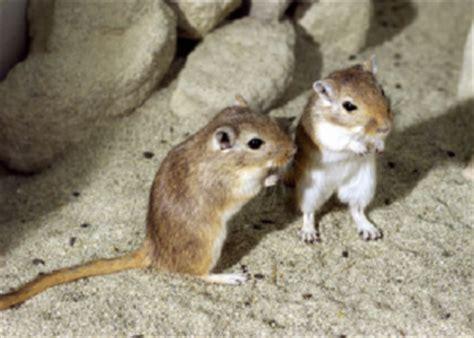 imagenes de la familia topo y el liron concepto de roedor definici 243 n en deconceptos com