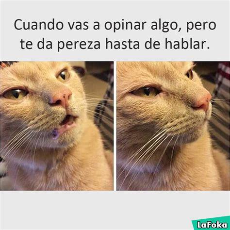 imágenes de animales chistosas para whatsapp etiquetas imagenes divertidas para whatsapp memes