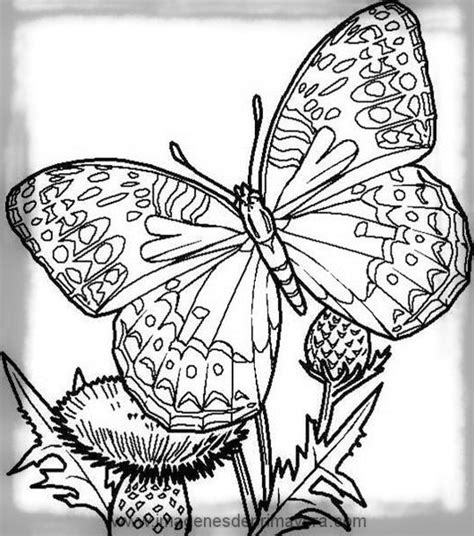 imagenes de mariposas en negro impresionantes dibujos de mariposas para imprimir en