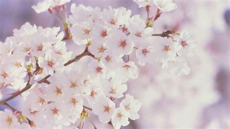 spring floral spring flowers spring wallpaper 22176495 fanpop