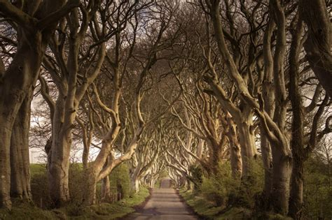 Passing Through the Dark Hedges in Northern Ireland
