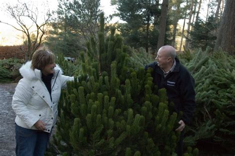 christmas tree sales centre set to open for business
