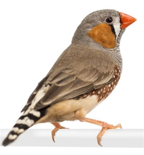 alimentazione uccelli uccelli alimentazione