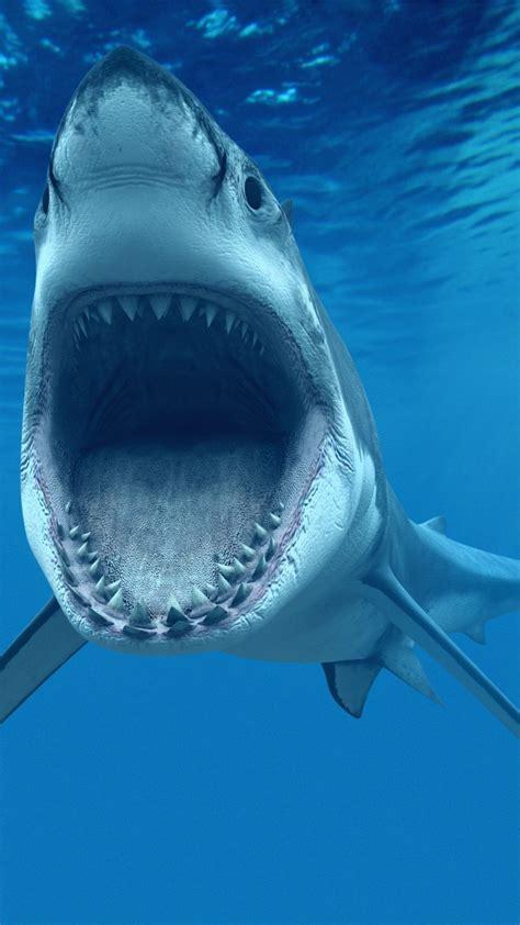 wallpaper shark underwater  diving sites animals