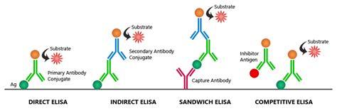 elisa test diagram image gallery indirect elisa